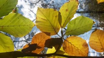 Herbst – Blatt- u. Versicherungswechsel?