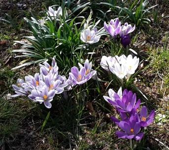 Frühlingsgefühle? Wenn aus zwei eins wird…